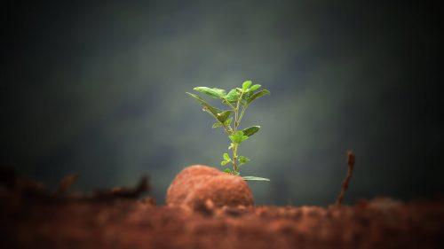 sapling grows from barren ground