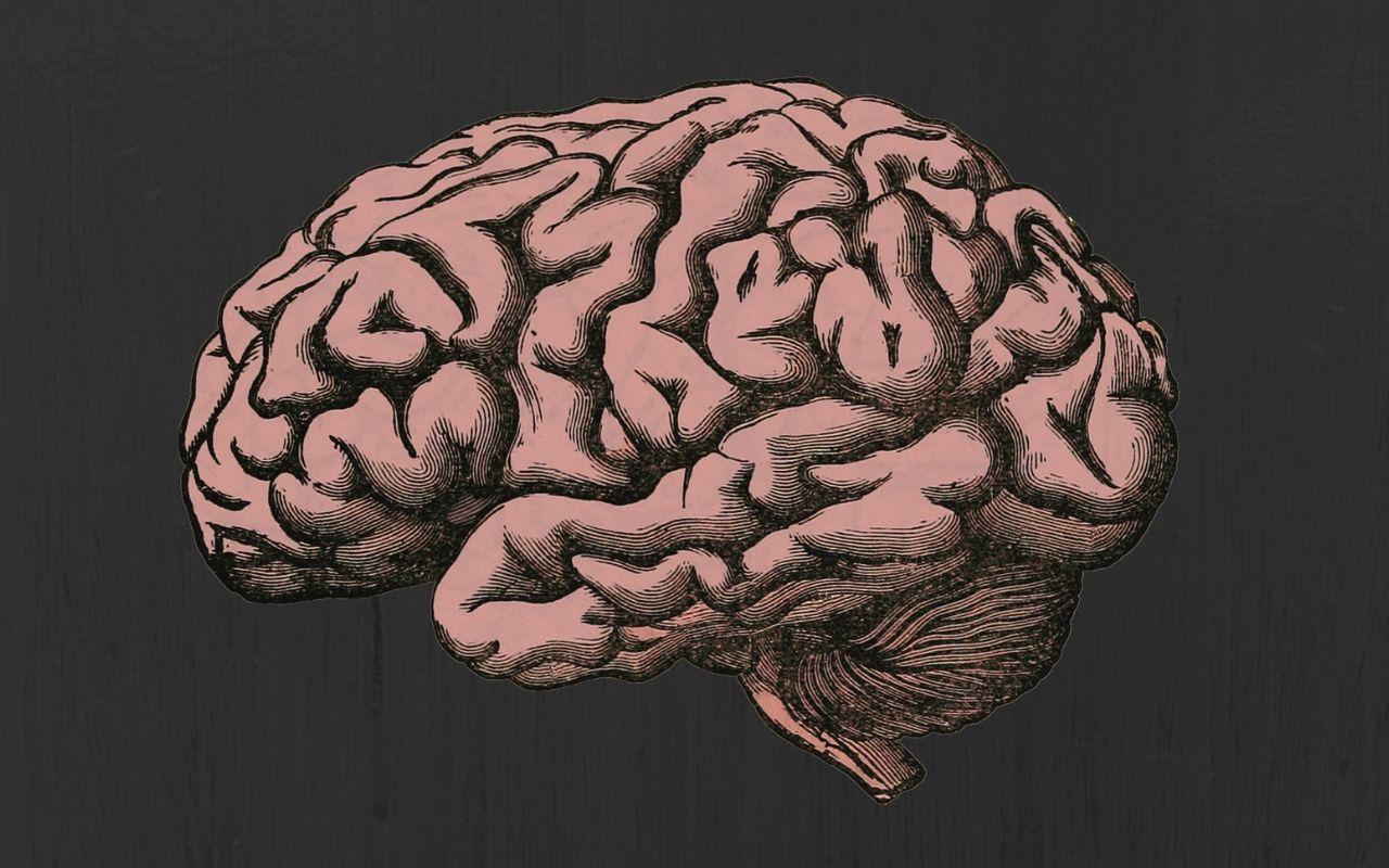 The Human Brain: A Primer